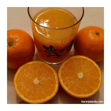 Naranja Navel Lane de suc (Caja de 15Kg)
