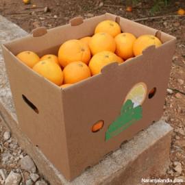 Naranja Valencia Late de zumo (Caja de 10Kg)