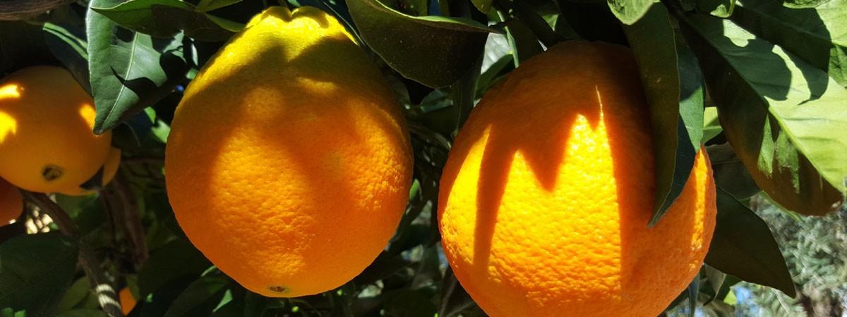 Naranjalandia